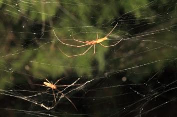 giant-spider-webs