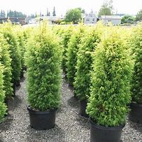 1.0 evergreen